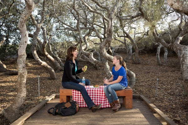 Picnic in the Elfin Forest and Oaks State Reserve in Los Osos