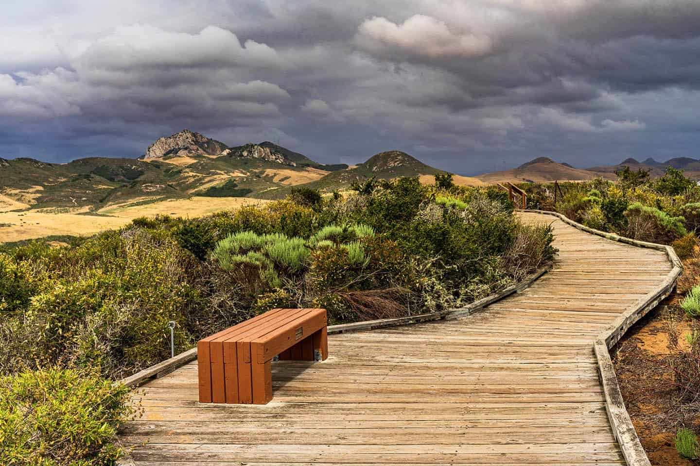 Elfin Forest Walkway Bench Photo Credit Michael Sheltzer